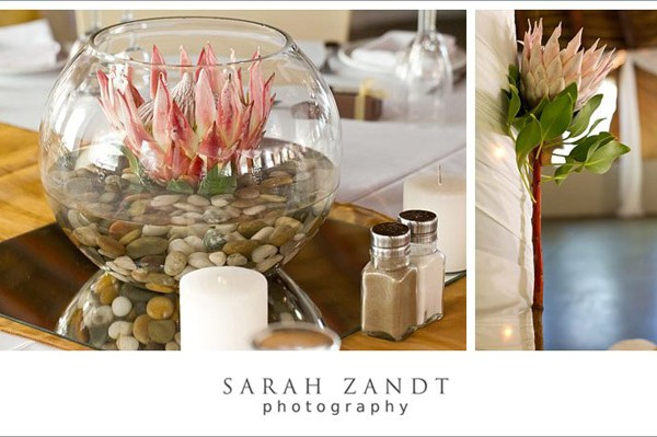 sarah-proteas